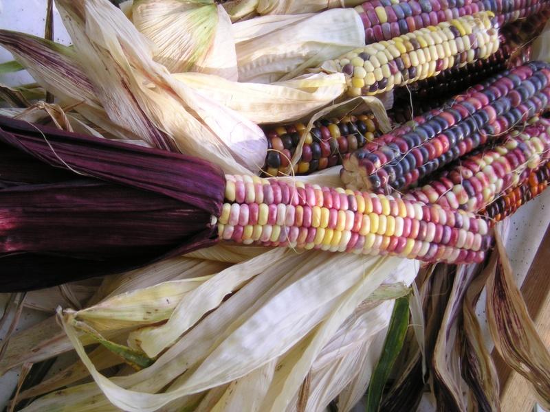 My favorite variety of corn
